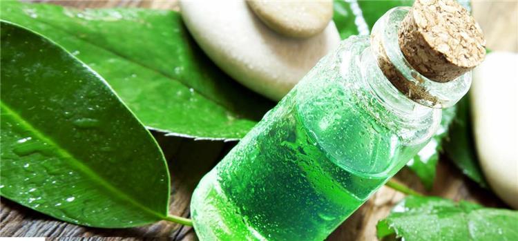 6 استخدامات منزلية مدهشة لزيت شجرة الشاي