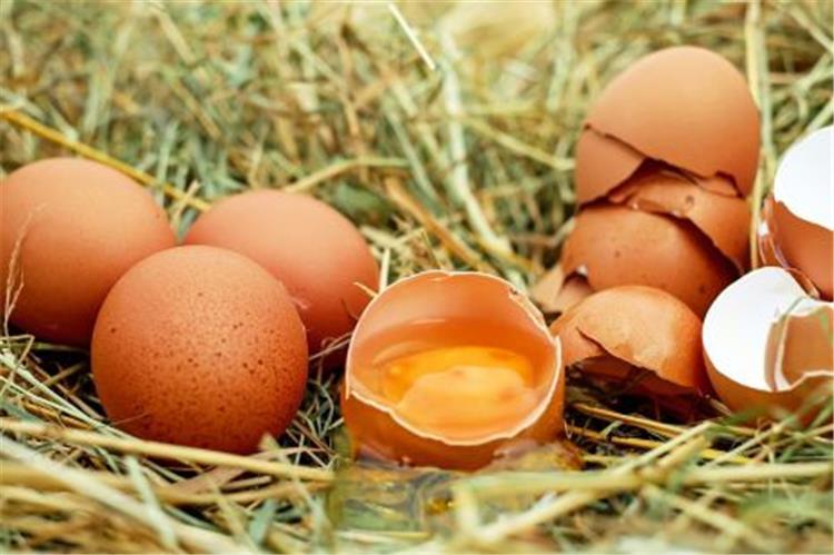 فوائد البيض للشعر يساعد في التخلص من مشكلة الجفاف والهيشان