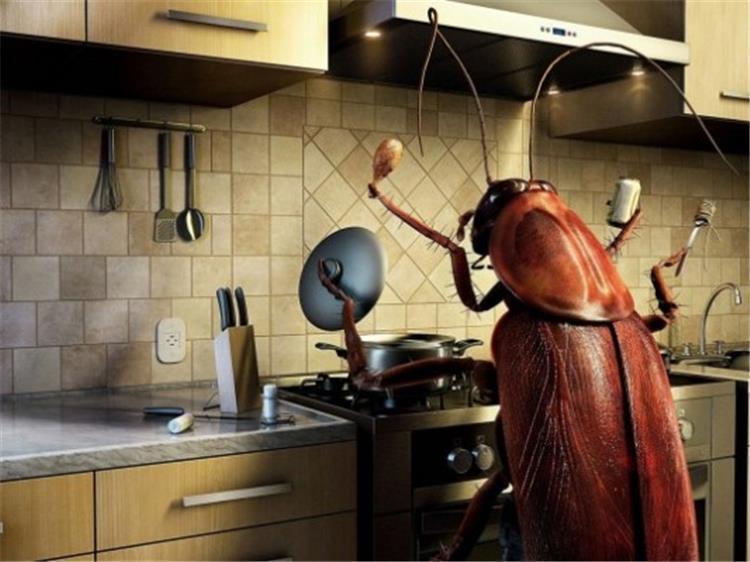 3 طرق تخلصك من صراصير المطبخ نهائي ا قبل العيد