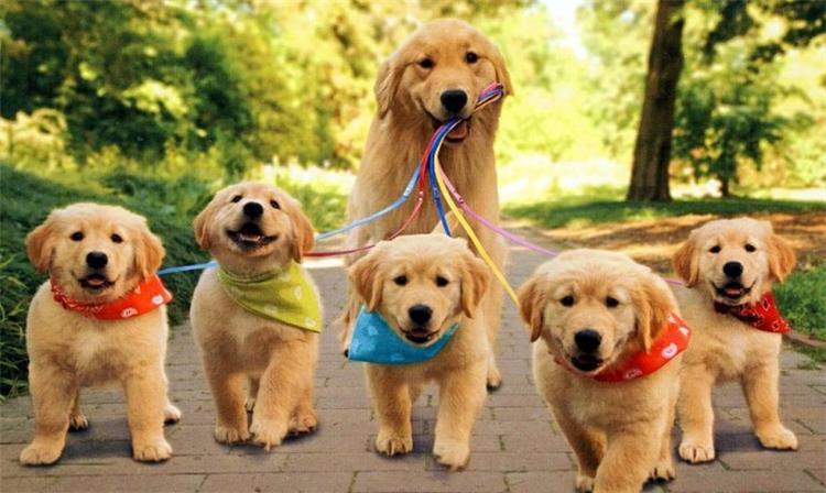 تفسير رؤية الكلاب في المنام ما بين التخوف والاطمئنان