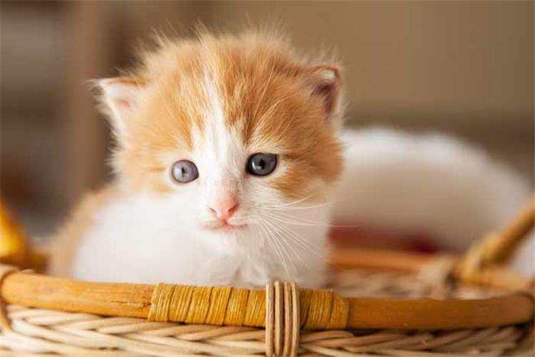 تفسير رؤية القطط في المنام البشارة والتحذير