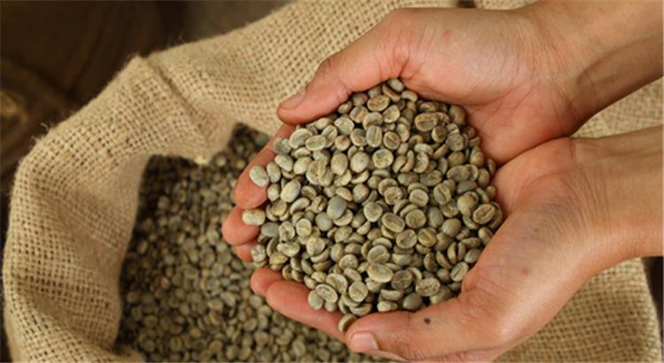 فوائد كبسولات القهوة الخضراء