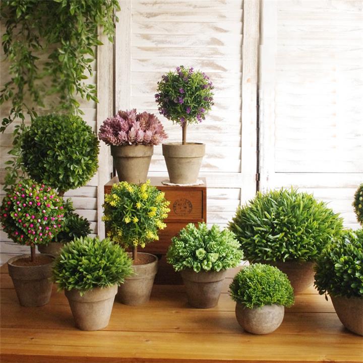 5 أنواع من النباتات تجدد الأكسجين في بيتك