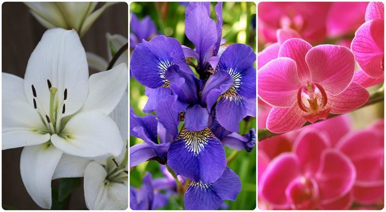 تعلم لغة الورود.. وعبر عن حبك