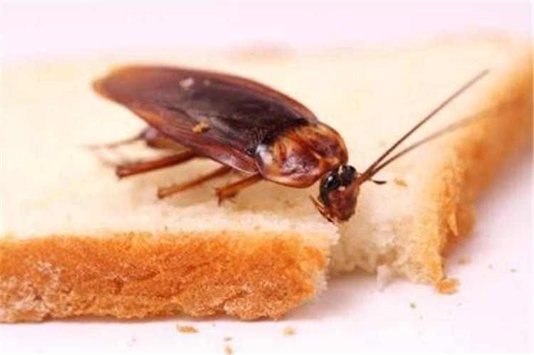 نصائح للتخلص من الصراصير نهائي ا