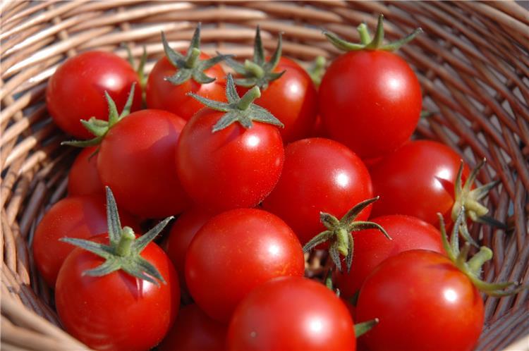 خزني الطماطم المجففة في رمضان