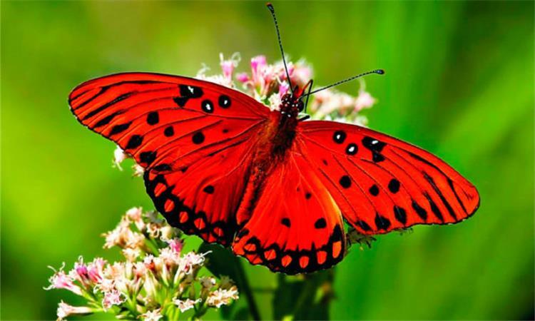 تفسير رؤية الفراشة في المنام بشرى سارة في الطريق إليك
