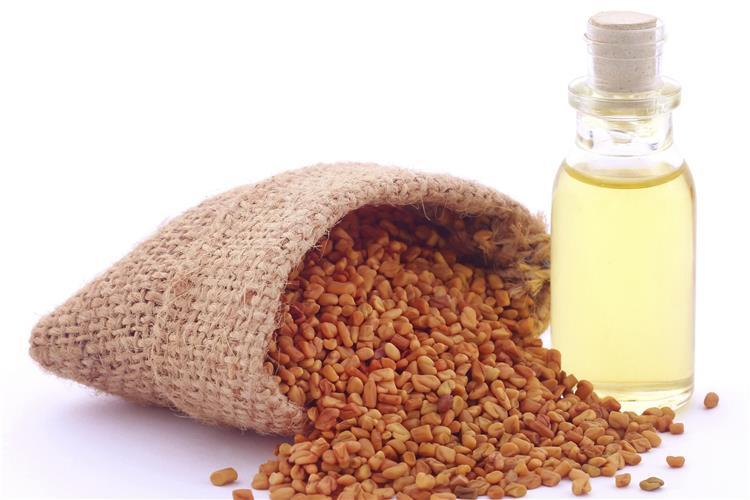 11 فائدة لزيت الحلبة للعناية بالبشرة وتكبير الثدي والأرداف ووصفات طبيعية