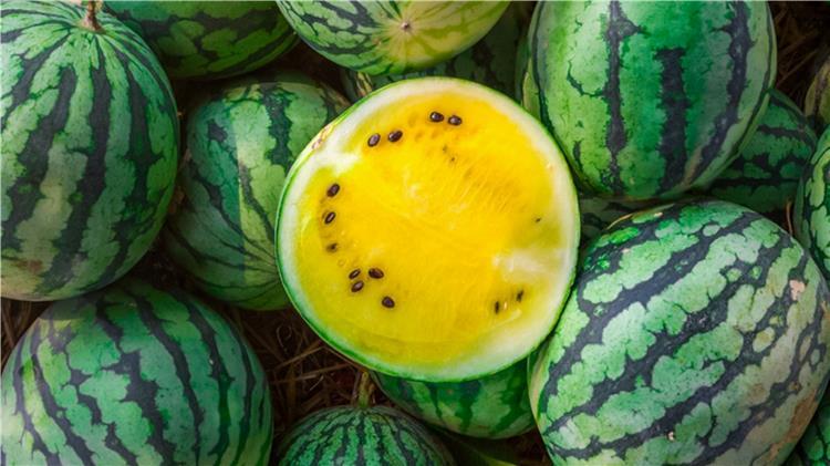 فوائد البطيخ الأصفر لمرضى السكري