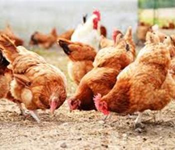 اسعار اللحوم والدواجن و الاسماك اليوم في مصر 16 يوليو 2018