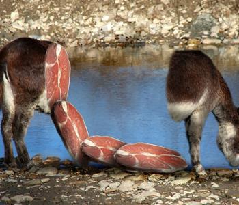 ازاي تعرفي لحم الحمير من نظرة واحدة