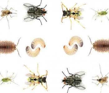 وصفات طبيعية للقضاء على الحشرات المنزلية بكل أنواعها